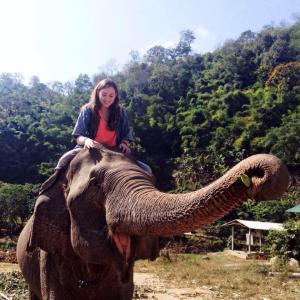 Elephant Nenagh