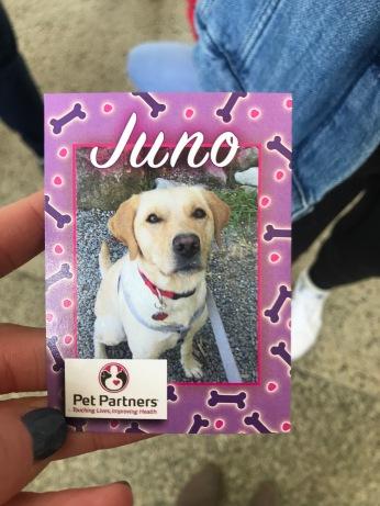Meet Juno!